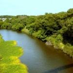 深緑の花見川